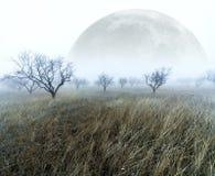Nebelige Landschaft Stockfoto