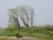 nebelige Landschaft Stockbild