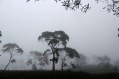 Nebelige Landschaft auf Sukawana Lizenzfreies Stockfoto