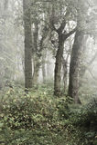 Nebelige Landschaft des Herbst-Falles Wald Lizenzfreie Stockfotos