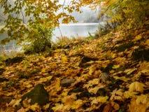 Nebelige Landschaft des Herbstes mit gefallenen Blättern Lizenzfreies Stockfoto