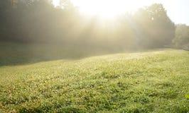 Nebelige Landschaft des schönen Morgens einer Wiese, die durch Sonne belichtet wird, strahlt aus Lizenzfreie Stockbilder