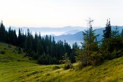 Nebelige Landschaft des von hinten beleuchteten Tageslichtes Stockfotos