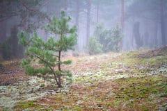 Nebelige Landschaft des Waldes Stockfoto