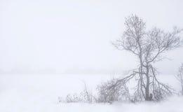 Nebelige Landschaft mit altem gebrochenem Baum und schneebedecktem Feld Stockfotos