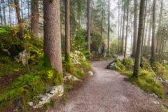 Nebelige Landschaft mit Autumn Forest lizenzfreies stockbild