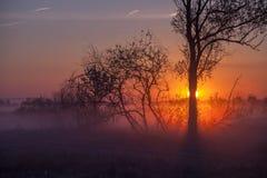Nebelige Landschaft mit einem Baumschattenbild Lizenzfreies Stockbild