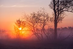 Nebelige Landschaft mit einem Baumschattenbild Stockfotos