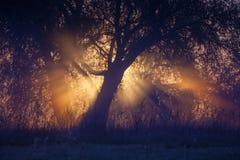 Nebelige Landschaft mit einem Baumschattenbild Stockfoto
