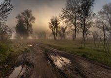 Nebelige Landschaft mit einem Baumschattenbild Lizenzfreie Stockfotos