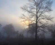 Nebelige Landschaft mit einem Baumschattenbild Stockfotografie