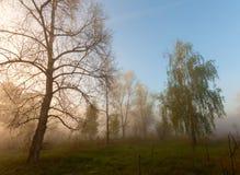 Nebelige Landschaft mit einem Baumschattenbild Lizenzfreie Stockbilder