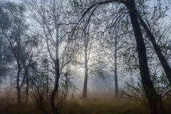 Nebelige Landschaft mit einem Baumschattenbild Lizenzfreies Stockfoto