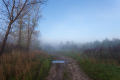 Nebelige Landschaft mit einem Baumschattenbild Lizenzfreie Stockfotografie