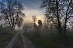 Nebelige Landschaft mit einem Baumschattenbild Stockbild