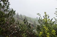Nebelige Landschaft mit weißen Blumen Stockfotografie