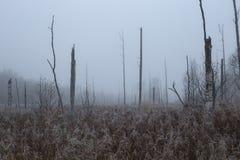 nebelige Landschaft Morgen des Sumpfs im Oktober Lizenzfreies Stockfoto