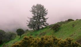 Nebelige Landschaft von Nord-Kalifornien lizenzfreies stockbild