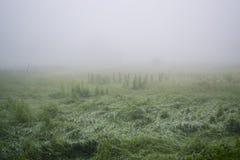 Nebelige Morgenlandschaft Stockfoto