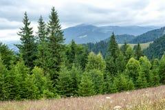 Nebelige Morgenlandschaft mit Kieferhochlandwald Lizenzfreies Stockfoto