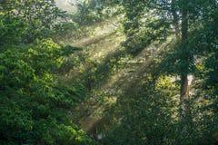 Nebelige Morgensonnenstrahlen, die durch spähen lizenzfreie stockbilder