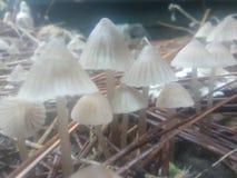 Nebelige Pilze stockfotos