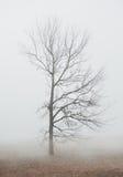 Nebelige schwermütige Szene mit Baum im Nebel stockbild