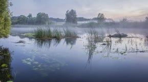 Nebelige Sommerlandschaft mit kleinem Waldfluß stockfotografie