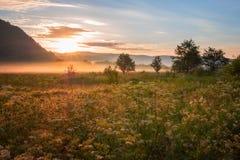 Nebelige Sommerlandschaft, Sonne steigt über die goldene sonnige taunasse Wiese lizenzfreie stockfotos