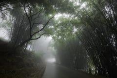 Nebelige Straße grenzte durch Bäume an Lizenzfreie Stockfotos