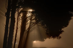 Nebelige Straßenlaterne um Mitternacht Lizenzfreie Stockfotos