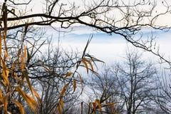 Nebelige Szene des blauen Morgens mit blattlosen Niederlassungen Stockbilder