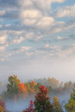 Nebelige Waldlandschaft lizenzfreie stockfotos