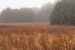 Nebelige Wiese am frühen Morgen Lizenzfreies Stockfoto
