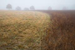 Nebelige Wiese am frühen Morgen Stockfotografie