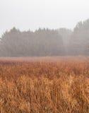Nebelige Wiese im Winter Lizenzfreie Stockbilder