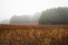 Nebelige Wiese im Winter Stockbild