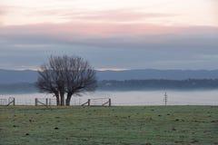 Nebelige Wintermorgenlandschaft und Baumschattenbild Lizenzfreies Stockfoto