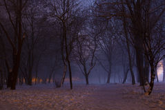 Nebelige Winternacht im Park Stockfotos