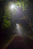 Nebeliger Abend im Park Lizenzfreies Stockbild