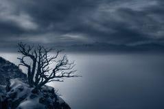 Nebeliger Abend und gespenstisches Baum duotone Stockfotos