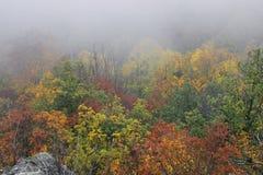 Nebeliger Autumn Forrest Stockbilder