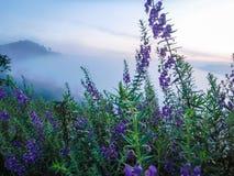 Nebeliger Berg vor Sonnenaufgang mit purpurroter Blume stockfotografie