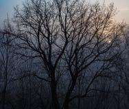 Nebeliger blauer Sonnenaufgang stockfotografie