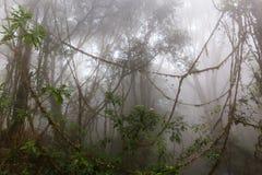 Nebeliger Dschungel Stockfotos