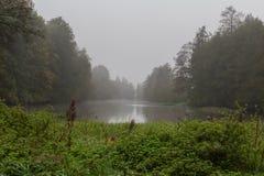 Nebeliger Fluss im Fall Lizenzfreies Stockbild