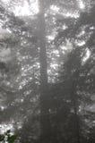 Nebeliger Forest Canopy lizenzfreie stockbilder