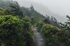 Nebeliger Forest Trail Stockfoto