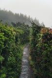 Nebeliger Forest Trail Stockfotos