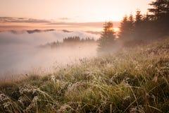 Nebeliger Gebirgsmorgen Stockbilder